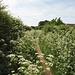 Viele Wanderwege führen entlang von Hecken