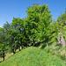 Oberhalb Eggerberg führt die Laldneri durch Weid- und Wiesland.