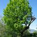 Alte Bäume sind ideal für nistende Vögel.