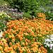 Im Garten zum Schloss Wartenfels
