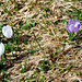 Boten des Frühlings…