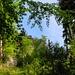 Frühlingswald. Im Aufstieg zur Bütziflue
