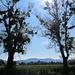 vermistelte Bäume und das Appenzeller Land im Hintergrund