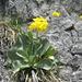 Blumen am Weg, oder besser am Felsen