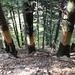 """""""Waldbewirtschaftung"""""""