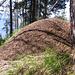 Lungo il percorso si trovano moltissimi formicai, alcuni hanno dimensioni veramente notevoli.