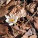 La primavera è arrivata!