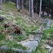 Mulattiera nel bosco di Toceno