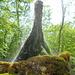 Wasserbaum Ockensen