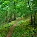 Schöner Waldpfad am Ith