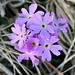 auf der Weide blühen schon viele Blumen