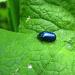 Ein funkelnder Käfer