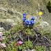 """Vielfältige Blumenpracht in allen Farben - trotz karger Landschaft auf dem """"Kamm"""""""