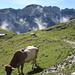 Alpenromantik, kurz nach der Alp Chlus