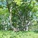 ....la vetta del Pizzo dell'Asino: un bell'albero invece della solita croce.