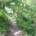 Ritorno attraverso il Sentiero dei Faggi o Sentiero Italia....