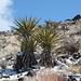 Ryan Mountain Trail - Am Wegrand