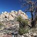 Ryan Mountain Trail - Kleine Extratour an der westlichen Felsformation südlich des Trailhead