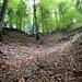 der steile Abstieg im Wald mit einem der zahlreichen Farbtupfer