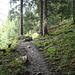 durch den Wald oberhalb des Sämtisersees