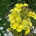 Flora dei Corni.