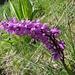 grosse Orchideen zieren den Weg