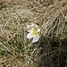 ..e la primavera arriva