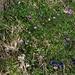 prachtvolle Blumenvielfalt