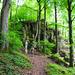 Schöner Steig im Wald