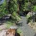 Die Grossi Wasserleitu hat einen üppigen Vegetationsgürtel