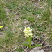1110 gelbe Blumen
