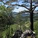 Blick vom Grat oberhalb P. 924 auf Bogentalweiher und Hohe Winde