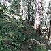 Steig im Wald auf dünner Spur