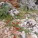 Immer wieder abwechselnder Blütenteppich in der Avlaki-Schlucht