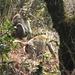 Paviane im Wald am Wegesrand