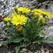 Erstaunlich, wo überall Blumen wachsen können...
