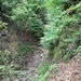 Sentiero nel bosco prima del rifugio Buzzoni
