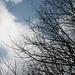 Winterliche Büsche – vor blauem Himmel!
