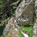 Die heikle Stelle: der Felssims ist mit einem glitschigen Algenteppich bedeckt