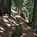 ......durch schönen Bergwald......