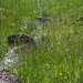 Auf Alp Ladu wird noch traditionell bewässert