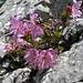 auf dem Kalkgestein fühlen sich viele Pflanzen wohl