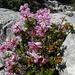 unbekannte Blumenpracht