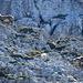 Diese Steingeiss und ihr Junges schickten ein paar Steine in unsere Richtung beim Aufstieg zum Brünnelistock