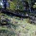 Durch steilen Wald gehts weglos aufwärts.