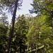 Durch den Wald erblickt man ab und zu den Gipfel.