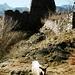 Die Rocca wird heutzutage nur noch von Ziegen bewohnt.