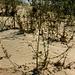 Auch in den Sanddünen wuchert die Vegetation.