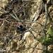 Zwar verwackelt, doch das Bild zeigt schön die Steilheit der Norwestflanke des Bettlachstock.