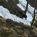 Abstieg vom Bettlachstock (im oberen Teil).
